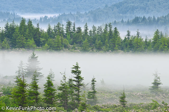 Morning Fog Dolly Sods Wilderness - West Virginia